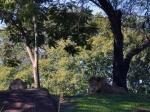 Walt Disney World, Animal Kingdom, Kilimajaro Safaris