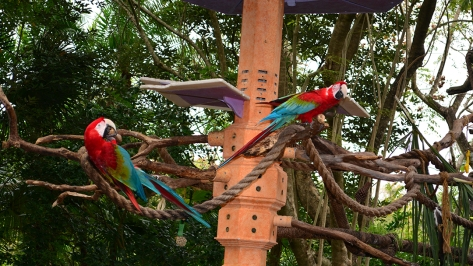 Walt Disney World, Animal Kingdom,  Character Changes,  January 2014, Macaws