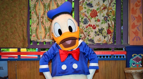 Donald Duck in his blue sailor suit at Disney World Animal Kingdom meet and greet
